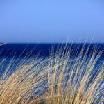 Alga spirulina e Vata: come l'azzurro entra nell'Ayurveda